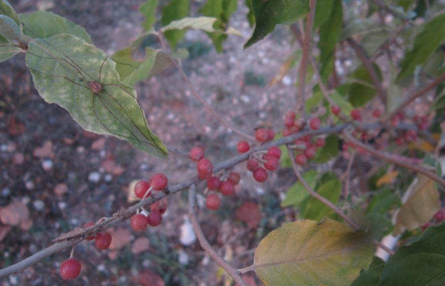 Piante frutti particolari ed esotici for Piante da frutto che resistono al freddo